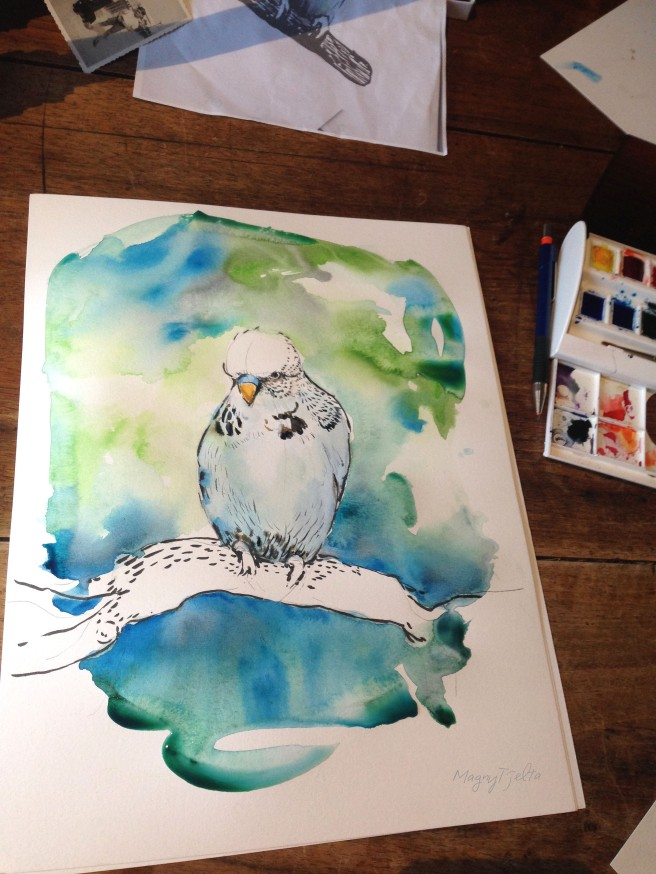 undulat how to paint an parakeet