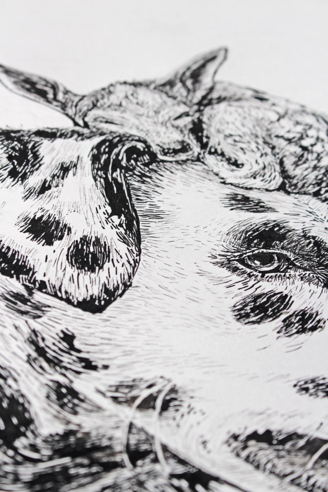 ink drawing dog, Drawing using pen and ink, magny tjelta
