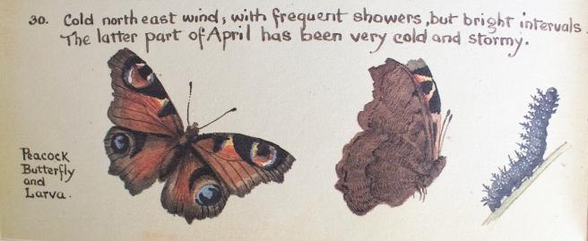 Watercolour, Edith Holden
